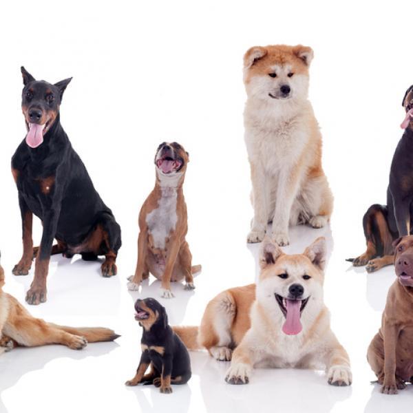 Machine Learning clasificacion perros